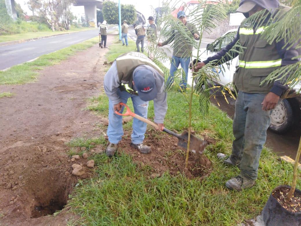 Planta árboles en la Independencia, la Reforma y Calzada Hidalgo.
