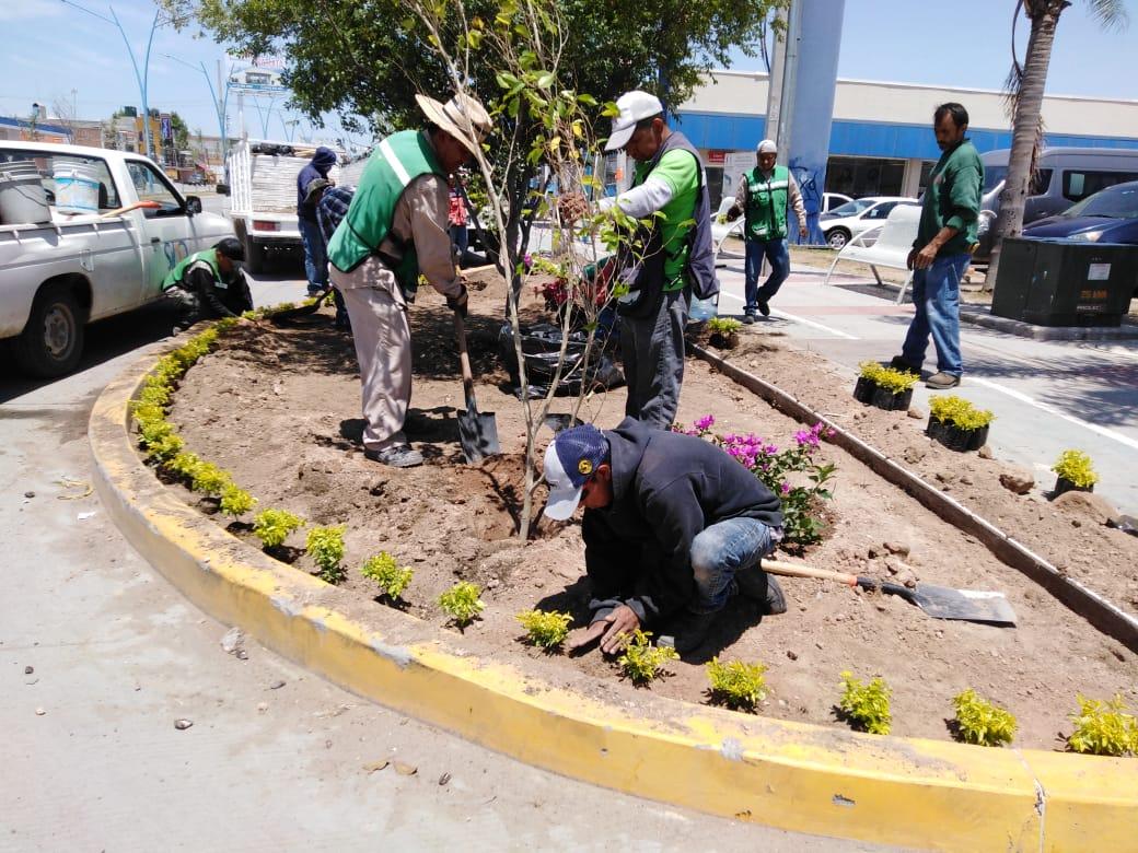 Servicios Públicos mantiene limpia y embellece la ciudad