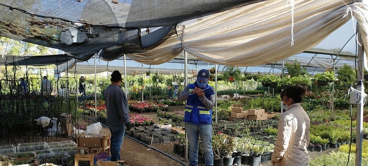 Ecología supervisa funcionamiento de invernaderos.