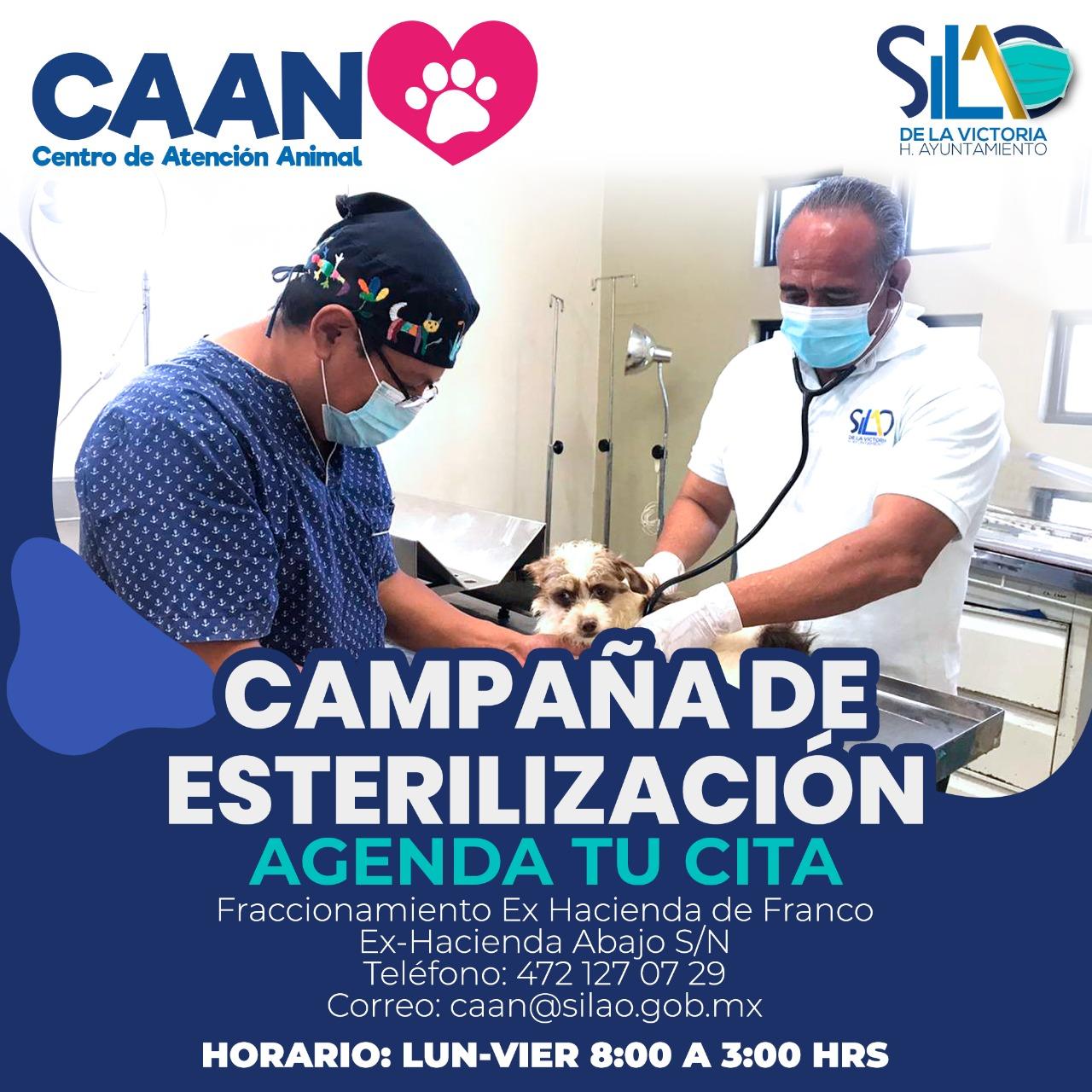 A partir del 15 de enero agenda tu cita de esterilización en el Centro de Atención Animal.